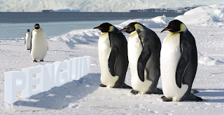 emperor penguins photoshop psd template download free peng water ice cold freeze glacier iceberg iceland frozen