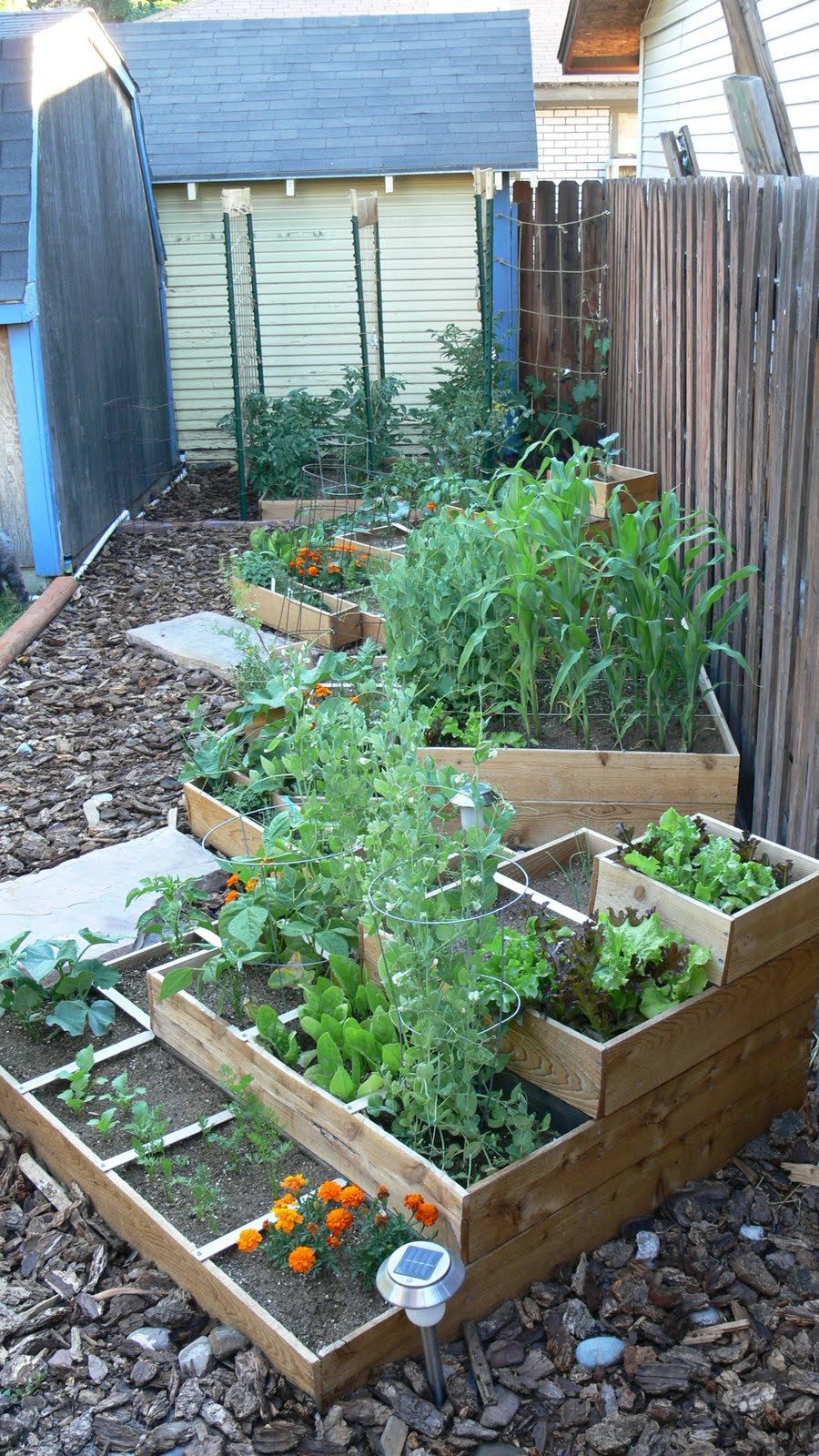Our Square Foot Garden