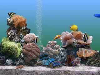 PÁGINAS ANTIGAS - Página 4 Marine_Aquarium_Screensaver