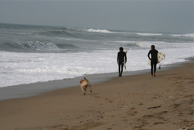 Huntington Beach pup and surfers