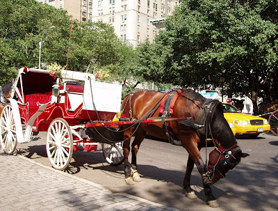 Horse drawn carriages of Central Park