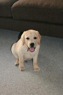 Cute puppy Cooper