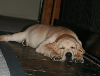 Snoozing pup