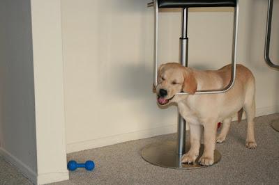 The puppy merry-go-round