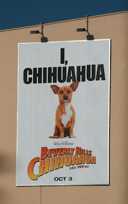 Maybe a new celebrity friend for Cooper?  Beverly Hills Chihuahua