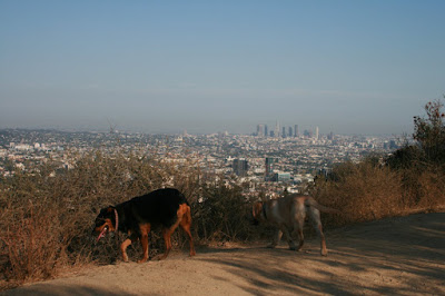 Cooper and Ginger at Runyon Canyon
