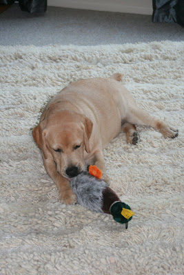 Duck toy & pup