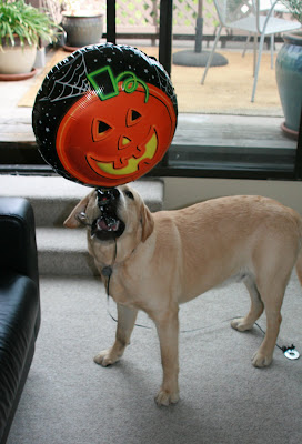 Pumpkin balloon puppy