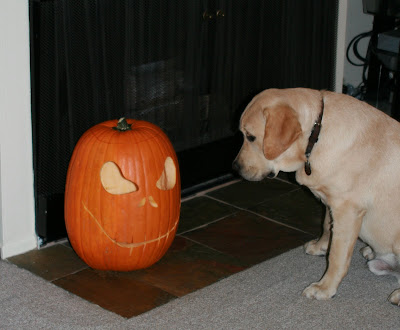 Pumpkin face & curious pup