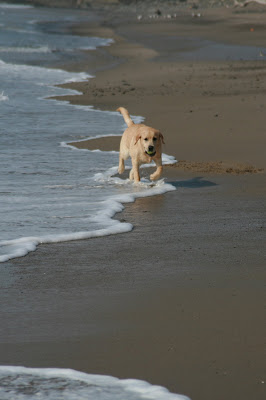 Surf fun for pup