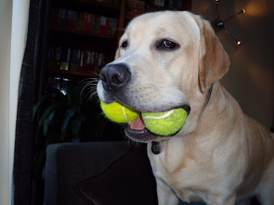 2 tennis balls in pup's mouth