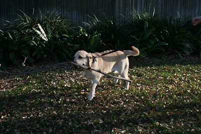 No stick too big for Cooper