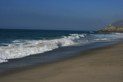 Sycamore Cove shoreline