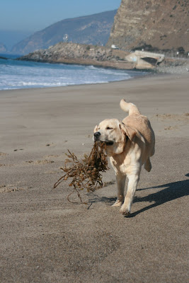 Seaweed puppy fun at the beach