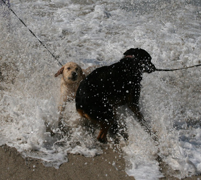 Cooper and Ginger in the waves