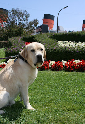 Cooper at Queen Mary seaport in Long Beach