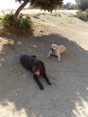 Cooper and Woody at Runyon Canyon