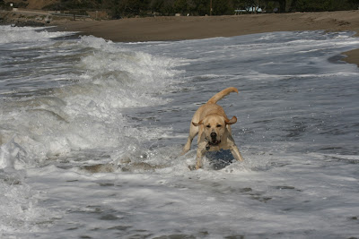 Cooper crashing through the waves