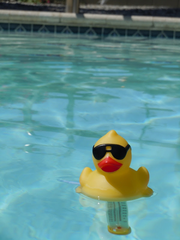 Palm Springs pool duckie