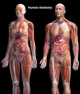 Artikel Pendidikan Organ Tubuh Manusia Bagian Dalam
