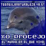 Display del Club: Delfín