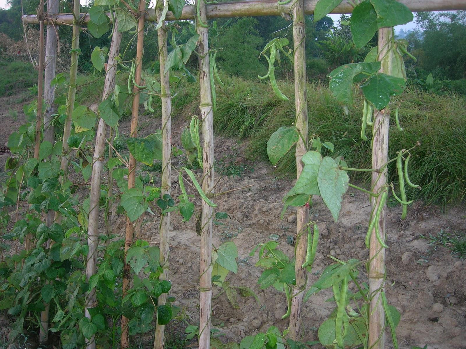 曾家小農園: 十二月 2010