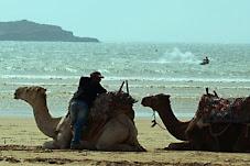 Colecciono Camelos