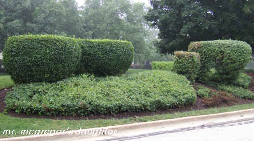 Why I Hate American Topiary & the Abuse of Stella