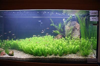 aquarium lore aquarama plant layout design competition 2007. Black Bedroom Furniture Sets. Home Design Ideas