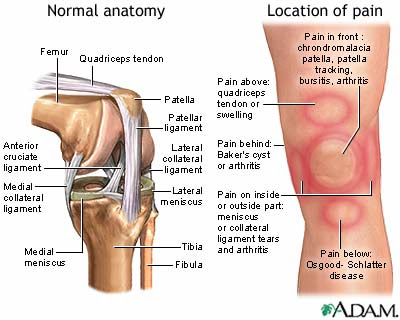 The Blonde Mule: Knee Pain - Ouch!