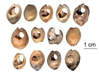Découverte près de Taforalt au Maroc, des plus anciens éléments de parure connus à ce jour