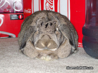 This disapproving rabbit disapproves (from disapprovingrabbits.com)