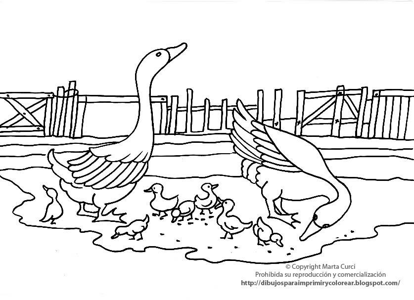 Dibujos De Patos Para Colorear Para Niños: Dibujos Para Colorear Y Pintar De Animales De La Granja