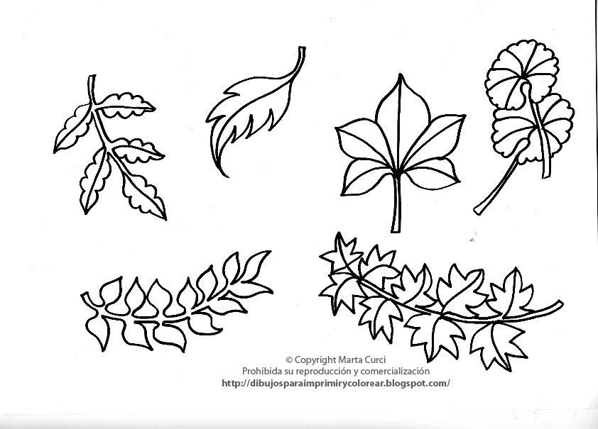 Dibujos De Hojas De Arboles Para Colorear: Dibujos Para Imprimir Y Colorear Gratis Para Niños: Dibujo