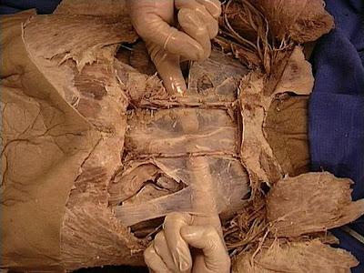 Imágenes de anatomía