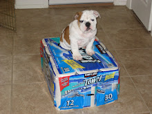King of the Papertowel Mountain!!