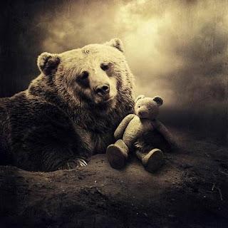 oso vida real y oso de peluche