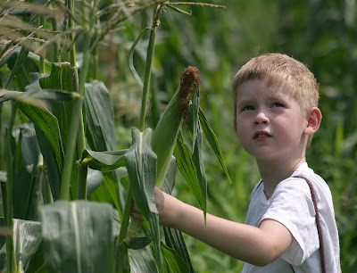boy in corn summer time NAMC montessori practical life activities develop independence