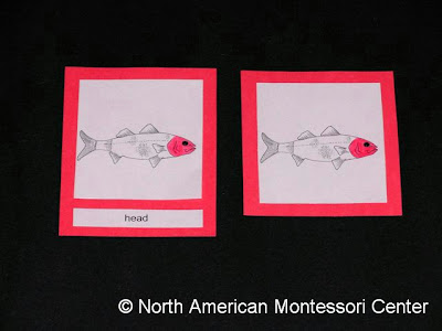 learn to make NAMC montessori nomenclature cards materials parts of the fish