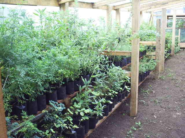 Vivero rio chaula for Plantas de vivero