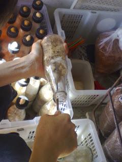 cendawan, kulat,mushroom,tiram,lingzi