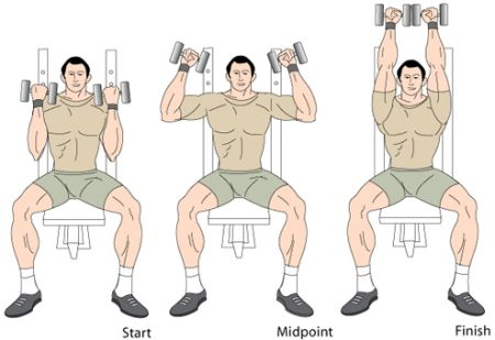 You Can Include Arnold Dumbbell Press In Your Strength Training Program To  Workout The Shoulder Muscles. To Do This Fitness Exercise Properly, ...
