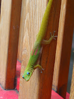 green lizard looking at the camera