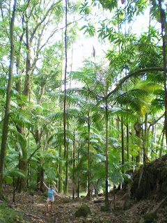 Nora Dunn surrounded by tall old rainforest in Hawaii