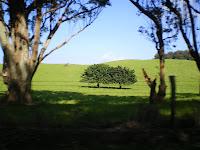 farmland in the north part of Hawaii's big island