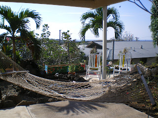 Hammock, chairs, and palm trees at the hostel in Kona Hawaii