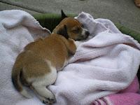nursing an injured puppy in Hawaii