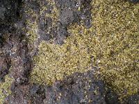 Green sand in Hawaii; visit Green Sand Beach while driving around the Big Island of Hawaii