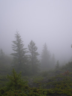 Grotto Mountain trees bathed in fog