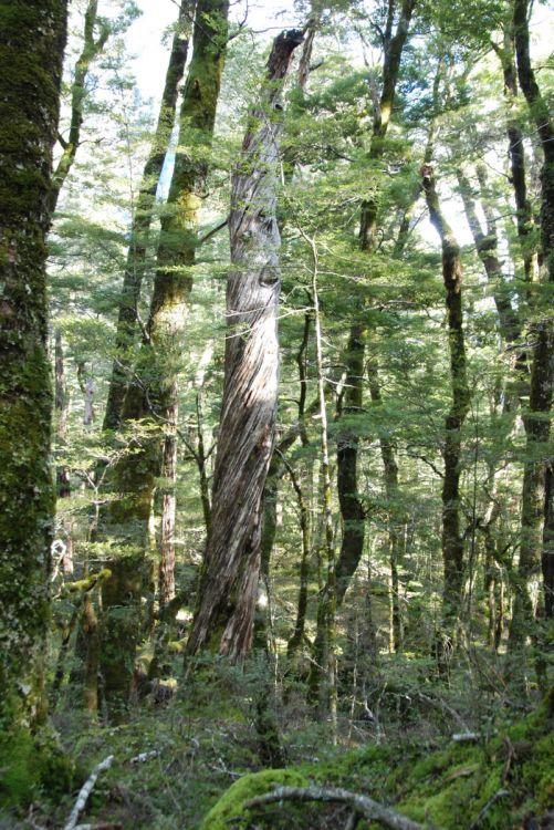 Nature in Mount Aspiring in New Zealand